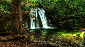 forest waterfall wallpaper full hd for