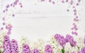تحميل خلفيات أرجواني الإطار زهرة إطار الأرجواني الزهور في الربيع