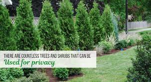 How To Choose The Best Privacy Trees Garden Goods Direct