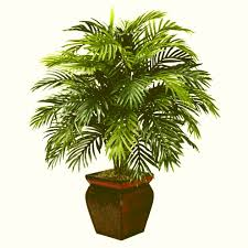 indoor floor plants plants ideas