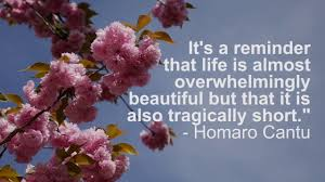 quotes about cherry blossoms