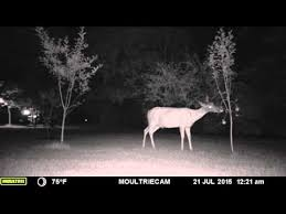 Deer Fence The Wireless Deer Fence For Guaranteed Deer Control