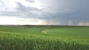 More rain needed | News | dbrnews.com