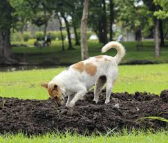 4 Tips On How To Stop A Dog From Digging
