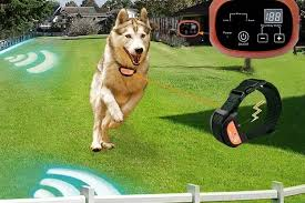 2020 Best Wireless Dog Fences Reviews Top Rated Wireless Dog Fences