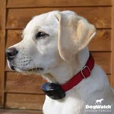 Hidden Dog Fence Customer Photo Gallery Metro East Dogwatch