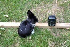 Pet Bunny Behind A Mesh Fence Stock Image Image Of Filming Garden 122797277