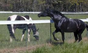 Fencing Solutions Low Cost Horse Fence T Post Caps Specialized Electric Fence Insulators Equi Tee Farm And Fence