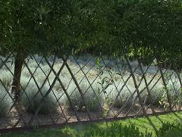 The Time Travelling Gardener Living Willow Fences