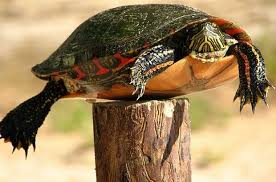 One Liner Wednesday Turtle On A Fence Post This That And The Other