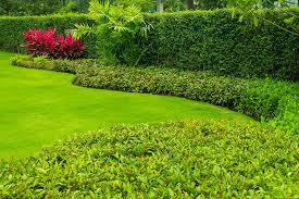 7 Best Plants For Hedges Pictures Growing Information Trees Com