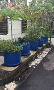 large blue drum pots gardening pots