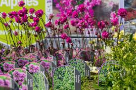 garden outdoor plants for at dean