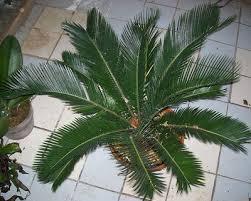 dangerous plants printable list and