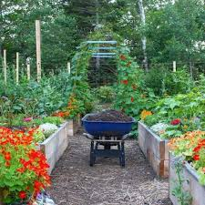 starting a home vegetable garden top