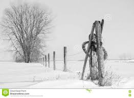 Large Tree With A Barb Wire Fence Post Running Past It Into The Distance Stock Photo Image Of Rural Weather 81354594