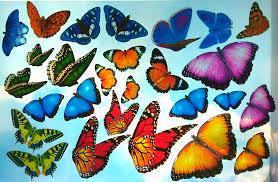 Butterfly Window Clings Realistic Butterflies Suncatcher Decals 27 Life Size Repositionable Colorful Decorations Window Clings Glass Window Decals Window Art