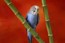 اجمل صور طيور فى العالم 2013 صور طيور متنوعة صور خلفيات للكمبيوتر