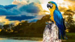 macaw wallpaper on hipwallpaper