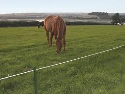 Equestrian Fencing Horse Fences Jacksons Fencing