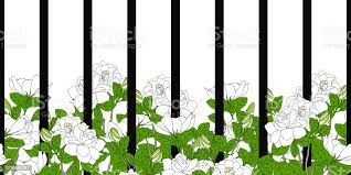 Fence And Flowers Frame Border Romantic White Gardenia Jasminoides Or Cape Jasmine Flower In Summer Background And Borders Stock Illustration Download Image Now Istock