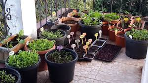 pot gardening in india 28 images