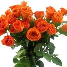 صور ورد حلوه احلى باقه صور من الورود معنى الحب