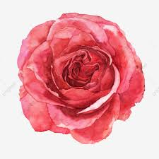 red flower flower watercolor fl
