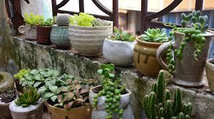 a succulent terrarium diy projects