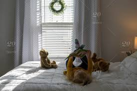 Preschool Age Girl Relaxing At Home Reading A Book In Morning Sunlight Stock Photo 063a11f7 Dee3 43d1 987d 33d83f14efcb