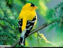صور طيور جميلة الطيور وجمالها اجمل الصور