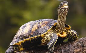 cute turtle wallpaper 2560x1600 74631