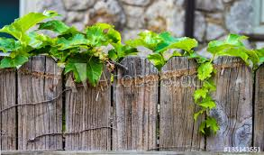 Ivy Growing Along The Top Of A Worn Wooden Fence With Blurred Stone Wall In The Background Buy This Stock Photo And Explore Similar Images At Adobe Stock Adobe Stock