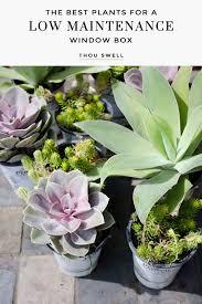 plants for a low maintenance window box