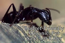 pet friendly kidsafe ant