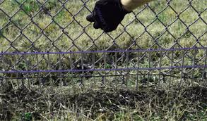 Dig Defence 2 Pack Xl Animal Barrier Lowes Com Black Chain Link Fence Chicken Wire Fence Fence