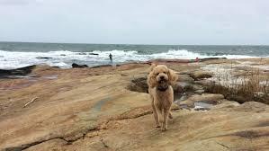 dog friendly beaches in ri bring your