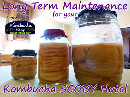 scoby hotel maintenance healthy
