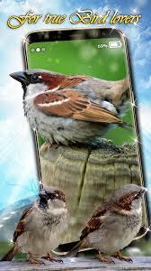 خلفيات الطيور خلفيات متحركه مع صوت For Android Apk Download