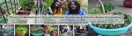 work on organic kitchen gardening