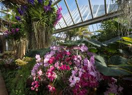 flower and garden shows
