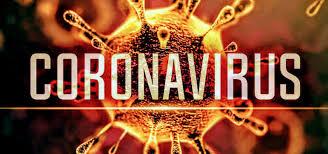 Coronavirus : cani e gatti - News