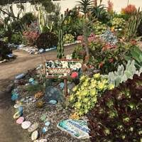 encinitas ca hand painted rock garden