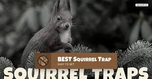 kinds of squirrel traps