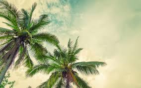 تحميل خلفيات النخيل غروب الشمس جوز الهند على شجرة النخيل جزيرة