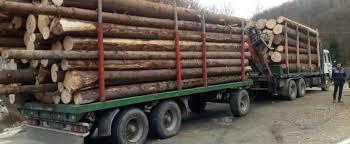 Pozele care pot opri transporturile ilegale de lemn! | CampaniaMea ...