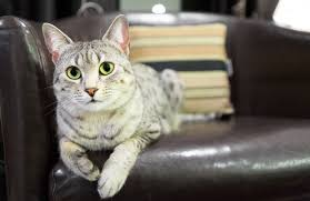 fix cat scratches on leather furniture