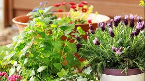 herbs more with container gardening