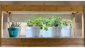 indoors under led grow lights