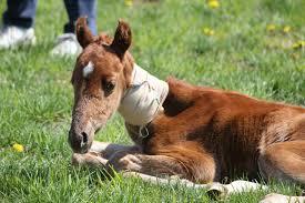 Health Problems In Newborn Foals The Horse